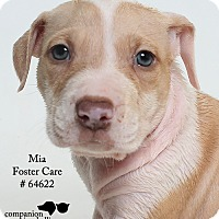 Adopt A Pet :: Mia (Foster) - Baton Rouge, LA