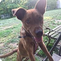 Adopt A Pet :: Briggan - Nashua, NH
