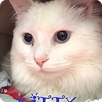Adopt A Pet :: KITTY - Mooresville, NC
