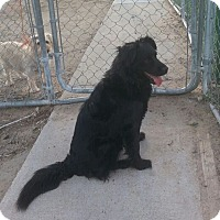 Adopt A Pet :: Muffy - Greeley, CO
