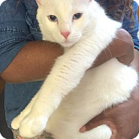 Adopt A Pet :: Beethoven LC - Schertz, TX
