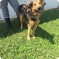 Adopt A Pet :: Misty - Sparta, NJ