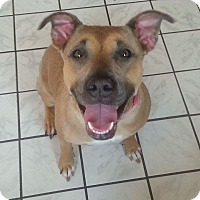 Adopt A Pet :: Roxy - Aurora, OH