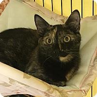 Adopt A Pet :: Fern - Furlong, PA