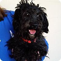 Adopt A Pet :: Puddles - Santa Maria, CA