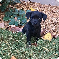 Adopt A Pet :: Stewart - Woodstock, GA