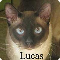 Adopt A Pet :: Lucas - Warren, PA