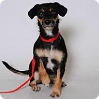 Adopt A Pet :: Antebella - Beverly Hills, CA