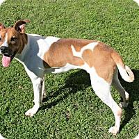 Adopt A Pet :: Charleston - Lufkin, TX