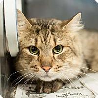 Adopt A Pet :: Fergus - Decatur, GA