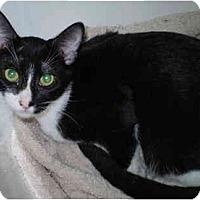 Adopt A Pet :: Zeb - San Ramon, CA