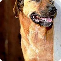Adopt A Pet :: Jett - Huntersville, NC