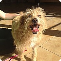 Adopt A Pet :: Mona - Mission Viejo, CA