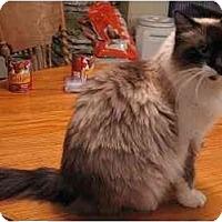 Adopt A Pet :: Raindrop - Davis, CA