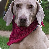 Adopt A Pet :: Abby - Hutchinson, KS