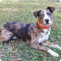 Adopt A Pet :: Kona - Mocksville, NC