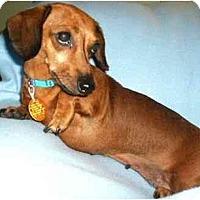 Adopt A Pet :: Suzie - Mooy, AL