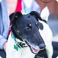 Adopt A Pet :: Obee - Burbank, CA