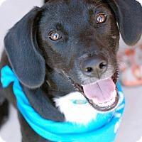 Adopt A Pet :: Jett - Hagerstown, MD