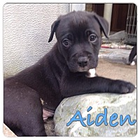 Adopt A Pet :: Aiden - Baton Rouge, LA