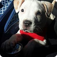 Adopt A Pet :: Aurora - Sacramento, CA