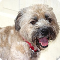 Adopt A Pet :: Barrett - adoption pending - Norwalk, CT