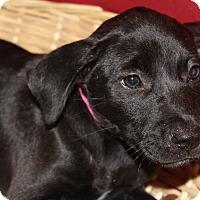 Adopt A Pet :: Della - Waldorf, MD