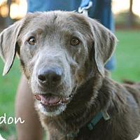 Adopt A Pet :: Gordon - Minneola, FL