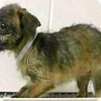 Adopt A Pet :: Elsa - Boulder, CO