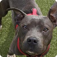 Adopt A Pet :: Mellie - Titusville, FL