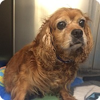 Adopt A Pet :: Ulla - Oak Ridge, NJ