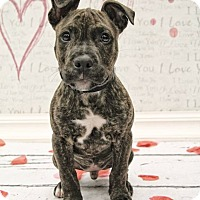 Adopt A Pet :: Alvin - West Allis, WI