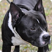 Adopt A Pet :: B.B - Lake City, FL