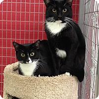 Adopt A Pet :: Moe - Winchendon, MA