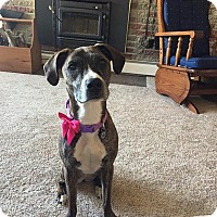 Adopt A Pet :: DAYZIE - Silver Lake, WI