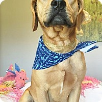 Adopt A Pet :: JETHRO - Schaumburg, IL