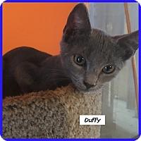 Adopt A Pet :: Duffy - Miami, FL