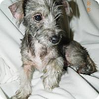 Adopt A Pet :: Summer - Umatilla, FL