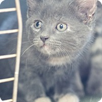 Adopt A Pet :: Asher - Homewood, AL