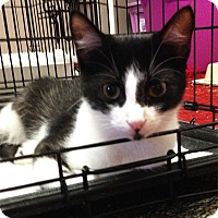 Adopt A Pet :: Crescent - N. Billerica, MA