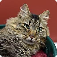 Adopt A Pet :: Fluff - St. Paul, MN
