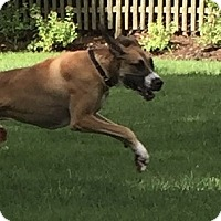 Adopt A Pet :: Bane - Springfield, IL