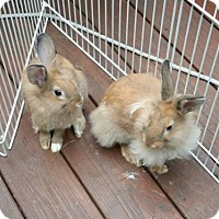 Adopt A Pet :: Lilith and Grace - East Stroudsburg, PA