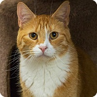 Adopt A Pet :: Patrick - Elmwood Park, NJ