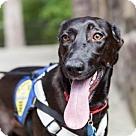 Adopt A Pet :: Amelie (Has application)