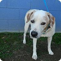 Adopt A Pet :: Bracken - Randleman, NC