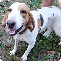Adopt A Pet :: Sunny - Lexington, MA