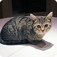 Adopt A Pet :: Jim - Rocky Hill, CT