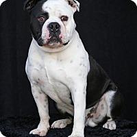 Adopt A Pet :: 8 Ball - SAN PEDRO, CA