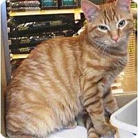 Adopt A Pet :: Doug - Colmar, PA